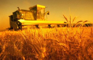 Saudi Arabia will invest $ 10.5 billion in the Ukrainian agricultural sector