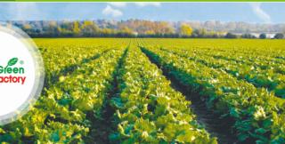 The Polish company Green Factory wants to grow vegetables in the Zakarpatsky region