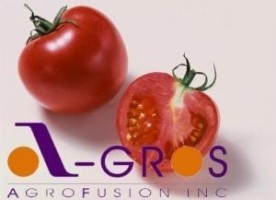 The largest producer of tomato paste will build a plant for $ 50 million