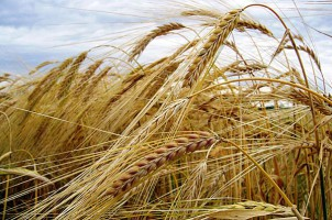 China is interested in the construction of grain processing plant in Ukraine