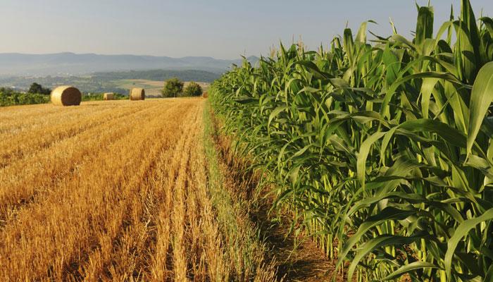 Grain Alliance планує збільшити земельний банк удвічі