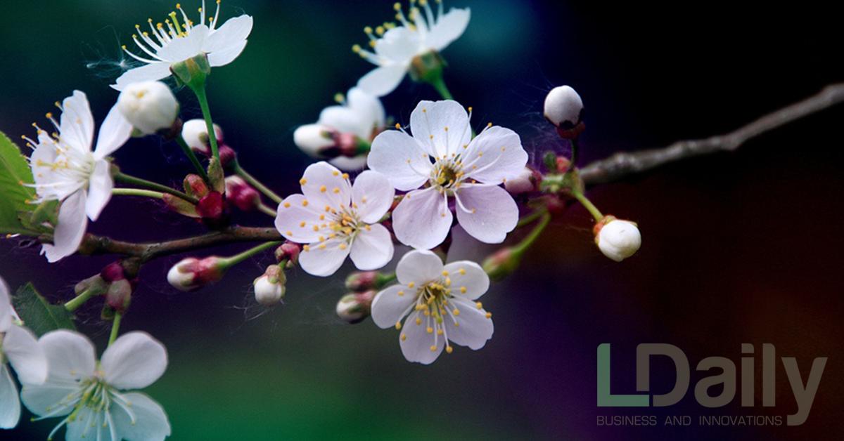 Компанія LNZ Group виводить на ринок свою інноваційну платформу LNZ Web, через яку можна придбати посівний матеріал, ЗЗР та добрива