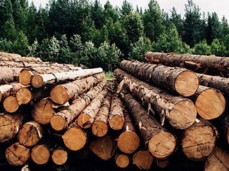 """Компания """"Украинские лесопильни"""" построит новый завод в Украине"""