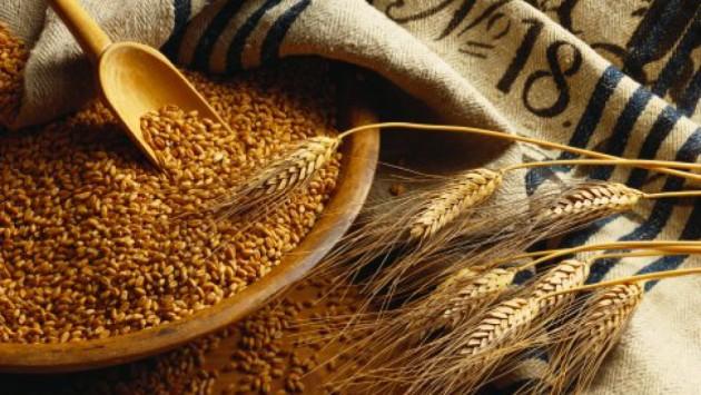 Україна за рік експортувала зерна на $6,4 млрд