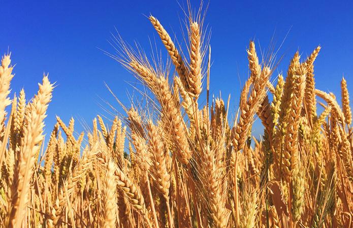 ЕБРР выделит Grain Alliance €10 млн