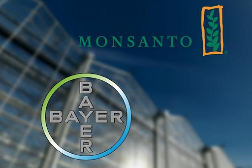 Угода Monsanto з Bayer: як це було?