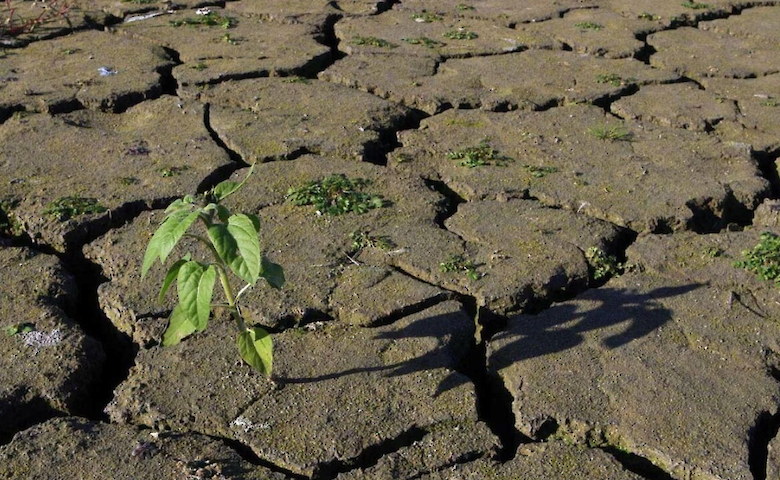 The losses of Ukrainian farmers due to the drought were estimated at 118 billion