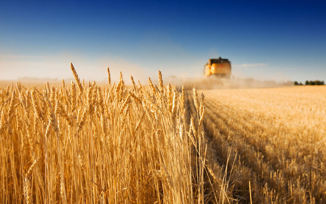 Ukraine sold agricultural products for $ 17.6 billion